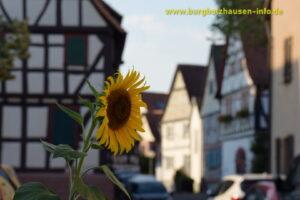 800-Jahrfeier Burgholzhausen an Pfingsten
