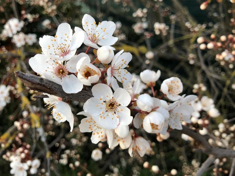 Burgholzhausen Frühling Blüten