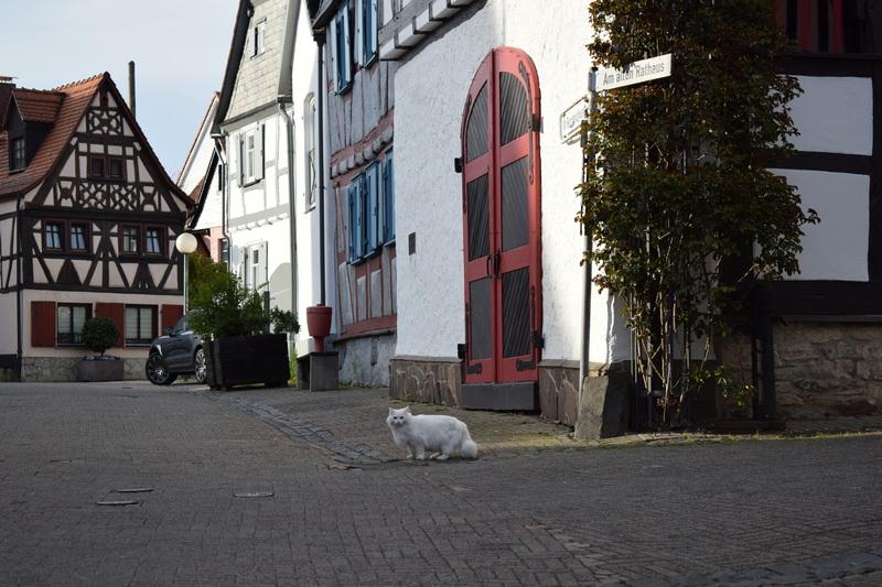 Burgholzhausen, Katze