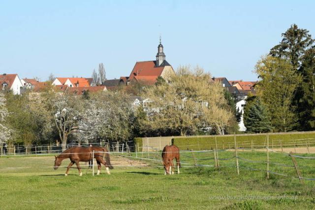 Burgholzhausen, Stadtteil im Frühling