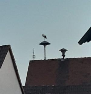 Storch, Burgholzhausen, Burgholzhäuser Stadtteilseite