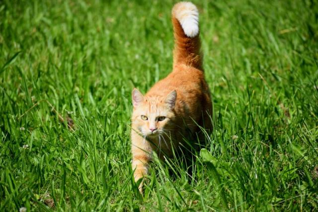 Katze, Tierische Woche, Burgholzhäuser Stadtteilseite, burgholzhausen-info