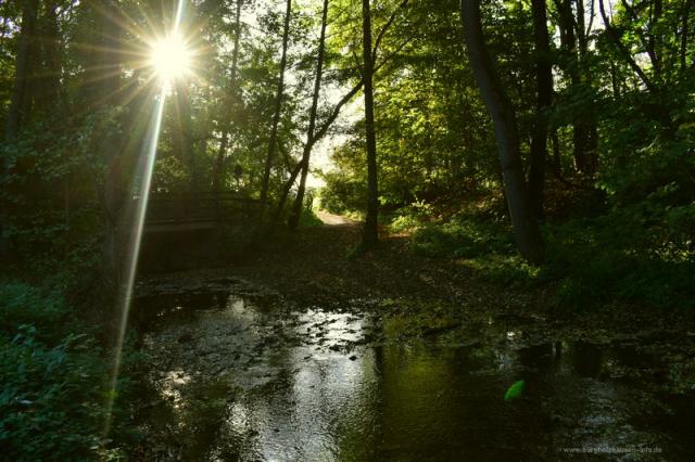 Sonnenuntergang an der Erlenbachfur